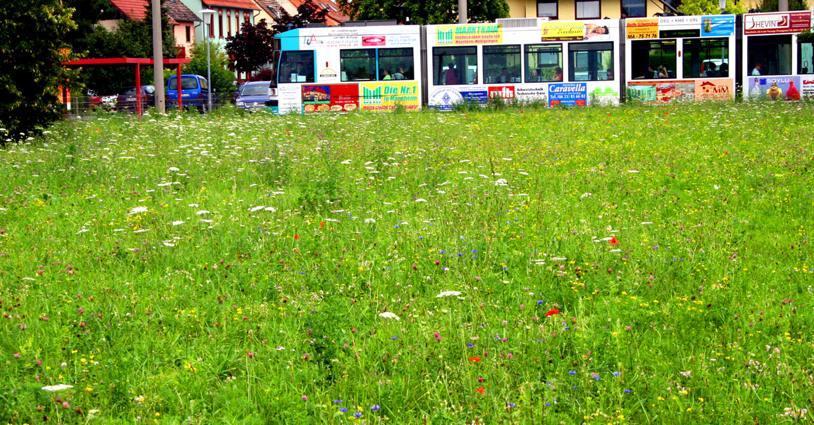 Blumenwiese gedeiht und macht Bahnfahrern Freude