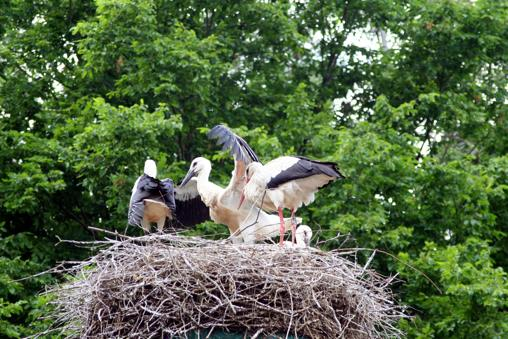Das Jahr der Heddesheimer Vögel