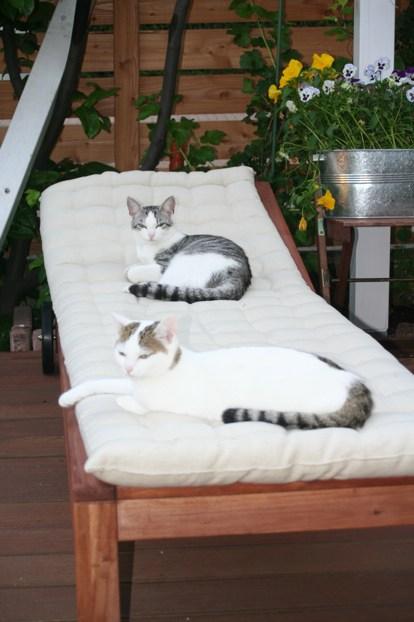 Das System Katze und was ich über mich gelernt habe