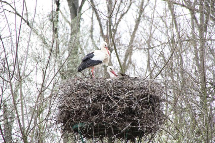 Hauptversammlung der Vogelfreunde