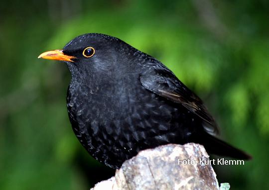 Nehmen Sie die Vogelfütterung wieder auf, damit es keinen stummen Frühling gibt